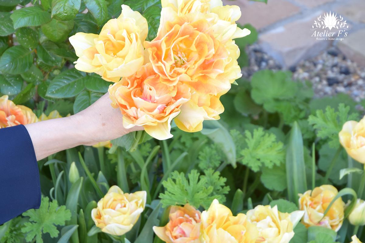 庭に咲いたチューリップを摘んで