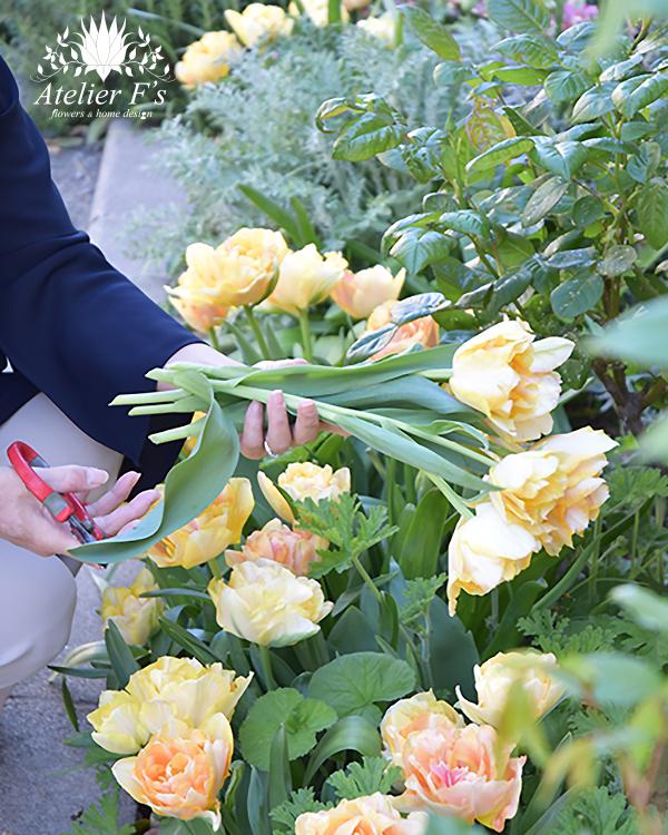 庭からチューリップを摘む