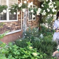 庭からグリーンを摘むカッティングガーデン